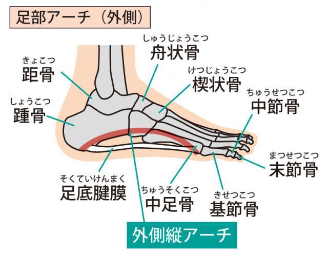 足底筋膜イラスト